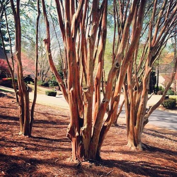 ga_trees2_bowen_design