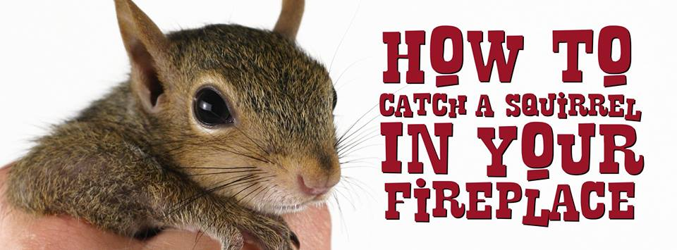 How To Catch A Squirrel In Your Fireplace Kevin Bowen Design